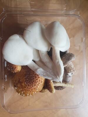 Gourmet Oyster Mushrooms- LOCAL 1lb