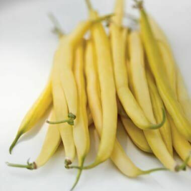 Yellow Beans - 1 lb LOCAL