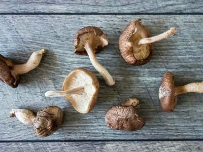 Gourmet Shitake Mushrooms- LOCAL 1lb