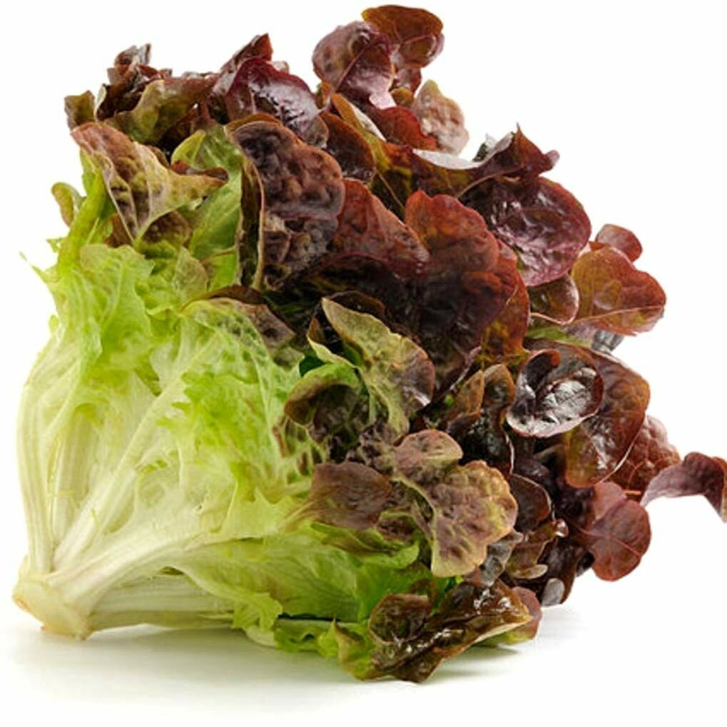 Red Leaf Lettuce LOCAL