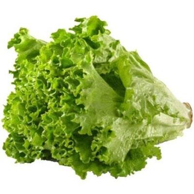 Green Leaf Lettuce LOCAL