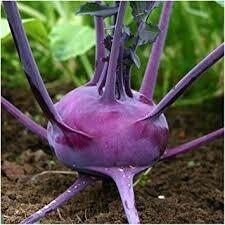 Kohlorabi Purple Vienna - Elmira LOCAL