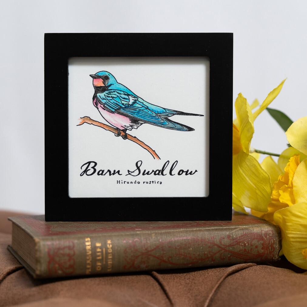 Barn Swallow Scientific Print