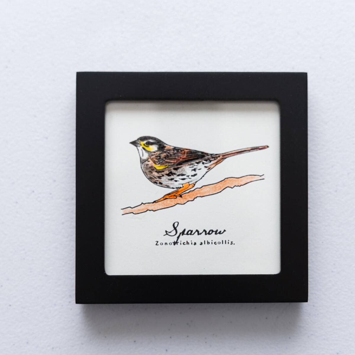 House Sparrow Scientific Print