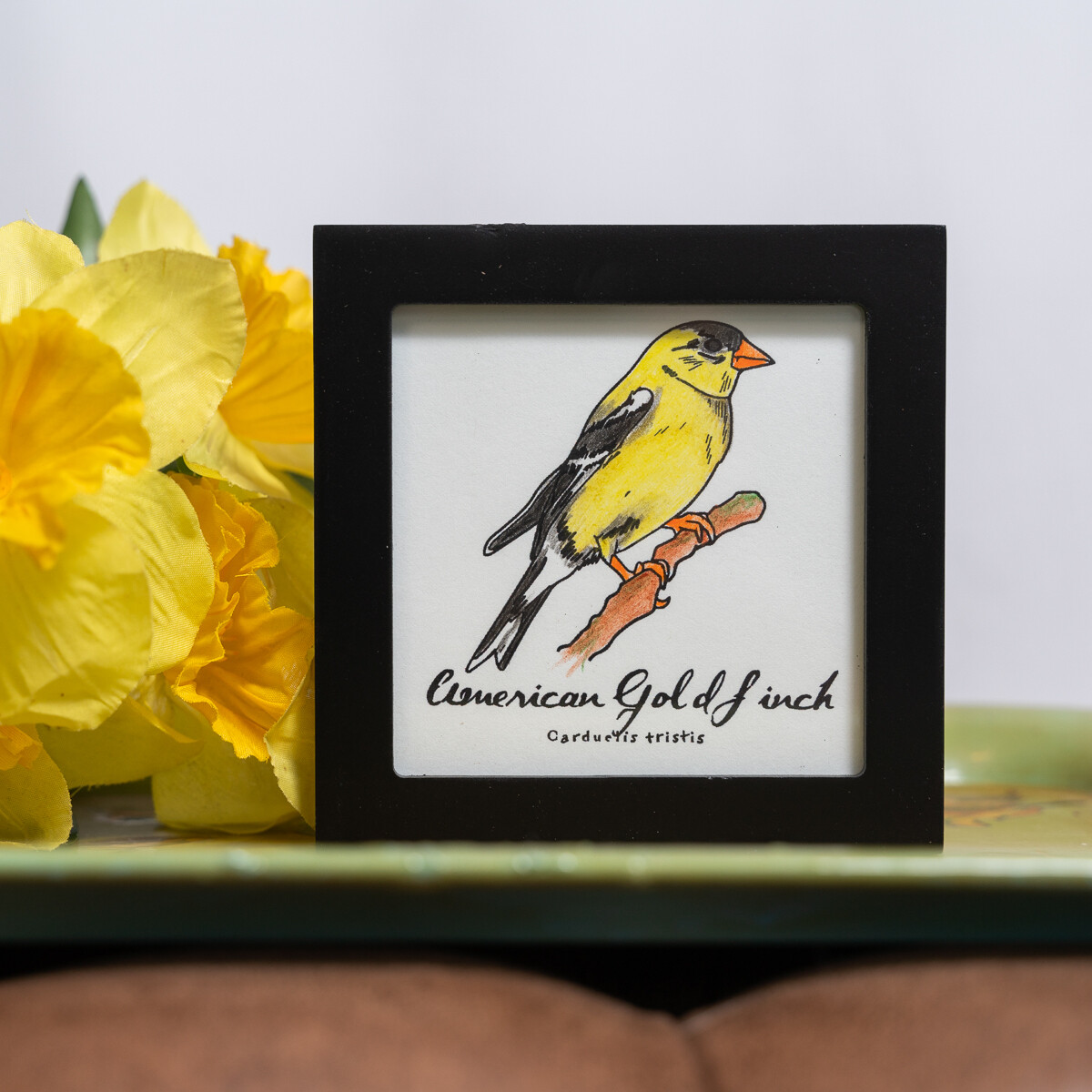 American Goldfinch Scientific Print