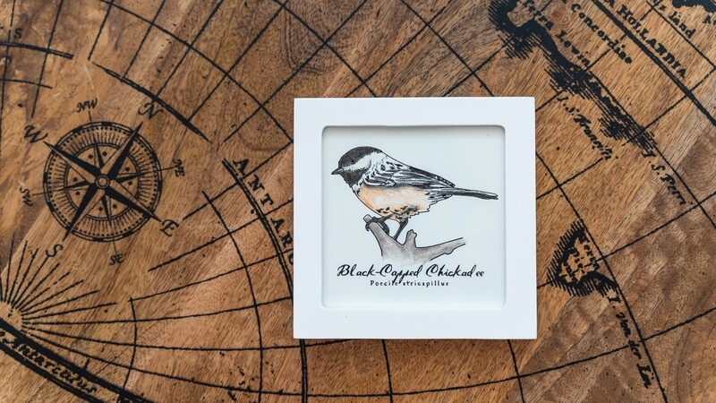 Chickadee Scientific Print