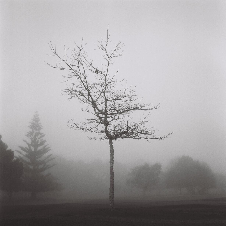 The Misty Tree
