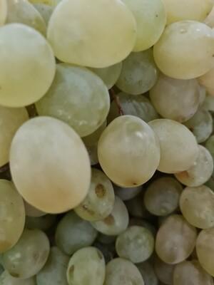 Uvas Branca