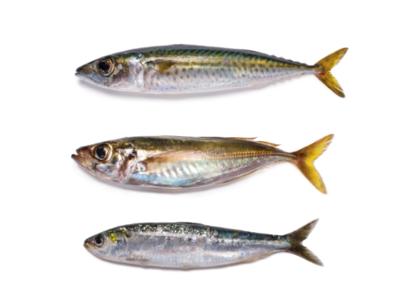 Cabaz de Peixe - Mista Tradicional