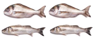 Cabaz de Peixe - D/R (douradas e robalos)
