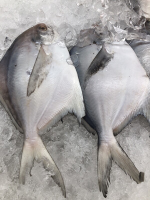 【RS】White Pomfret 2pc 冰鲜白鲳鱼 (Cleaned) ~1lb