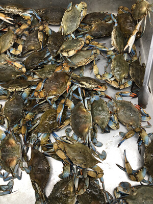 【RS】Fresh Blue Crab 新鲜活蓝蟹 螃蟹 ~5lbs