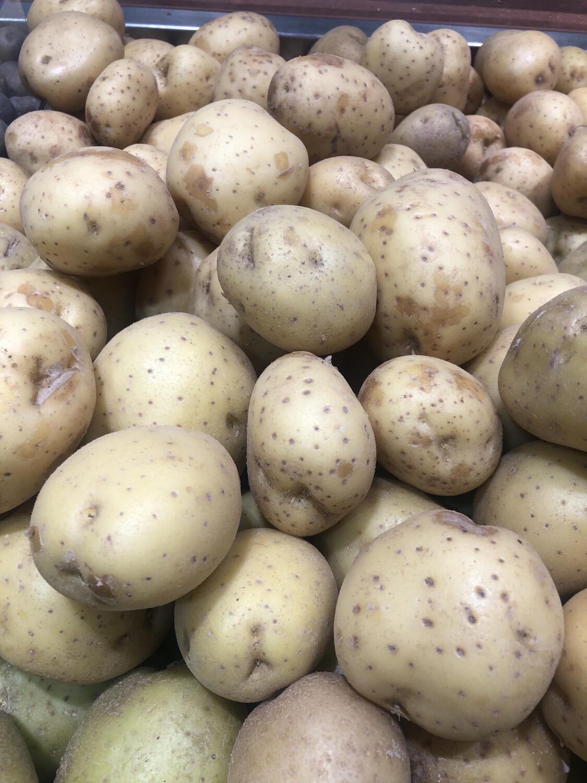 【RBP】White Potato 白马铃薯 ~3lbs