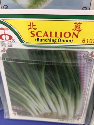 【RBG】Veg. Seeds Scallion 北葱种子