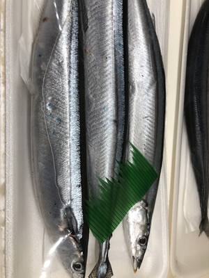 【RS】Fresh Mackerel Pike 新鲜秋刀鱼 ~1lb