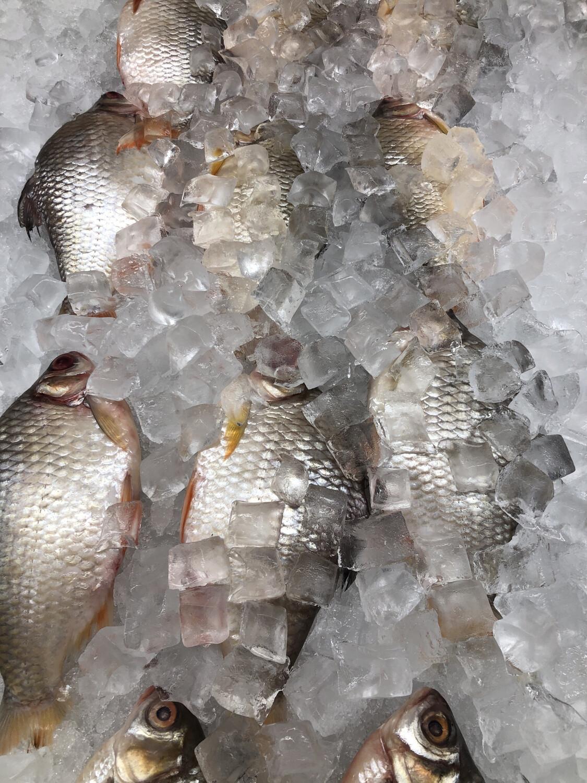 【RS】Fresh Red Barb Fish (Cleaned) 冰鲜红鲫鱼3条(已清理) ~1.6lbs