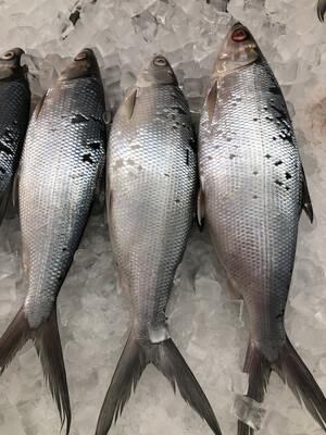 【RS】Milk Fish (Cleaned) 冰鲜虱目鱼(已清理)1EA