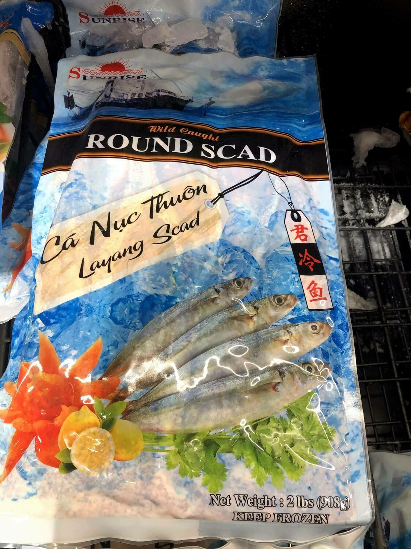 【RBS】Round Sead 君冷鱼 908g