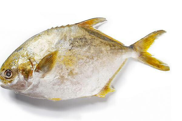 【RS】Gold Pomfret (Cleaned) 冰鲜金鲳鱼(已清理)~1.5lb
