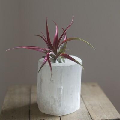 Selenite Candle Tealight