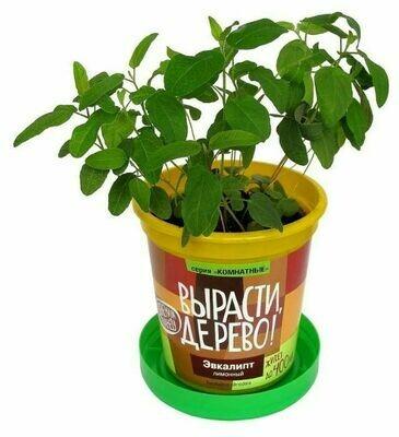 Набор для выращивания Вырасти, Дерево! Эвкалипт лимонный