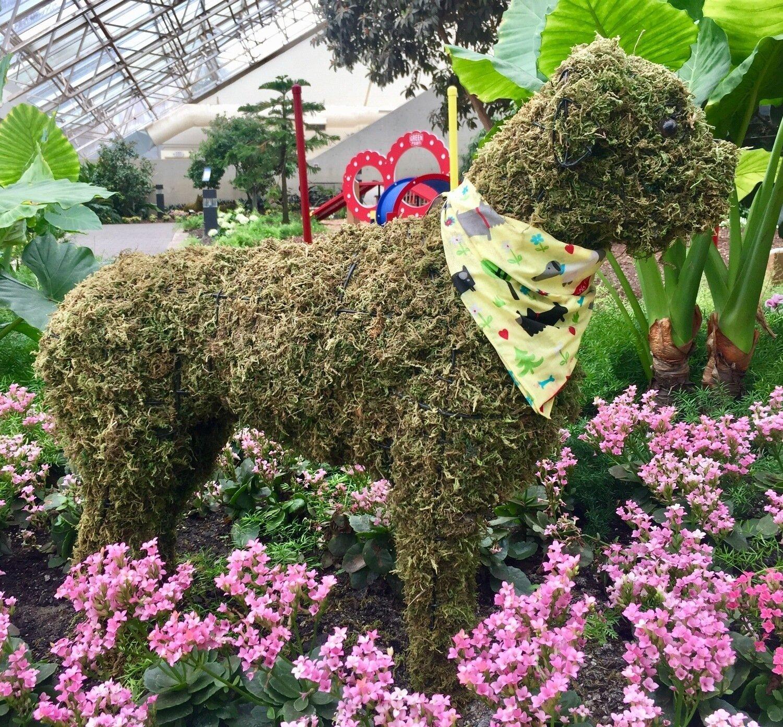 Boxer Topiary