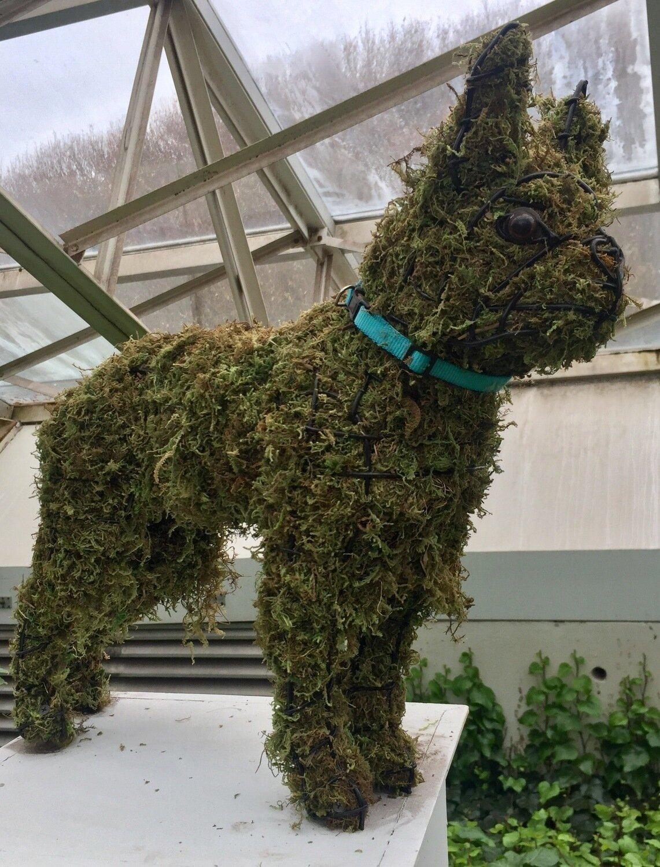 Boston Terrier Topiary