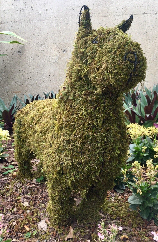 Bull Terrier Topiary