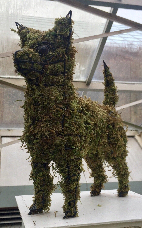 Chihuahua Topiary