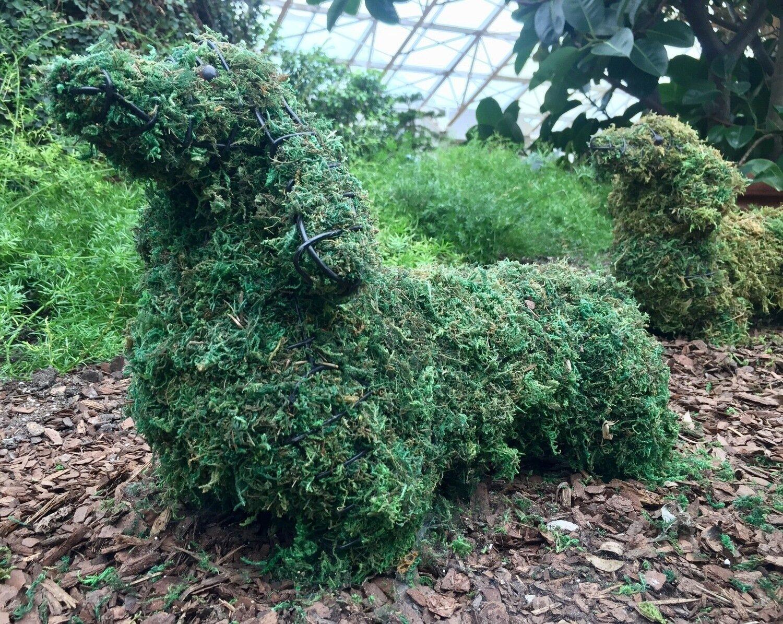 Dachsund Topiary