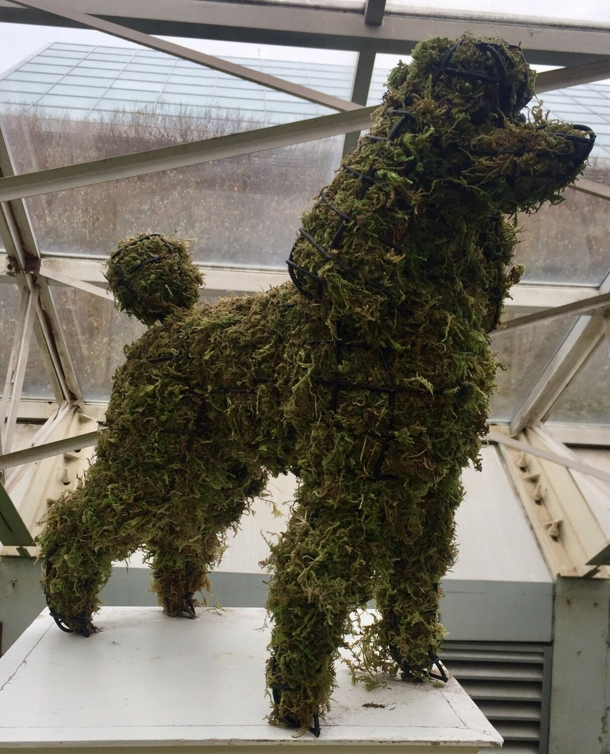 Poodle - Mini Topiary