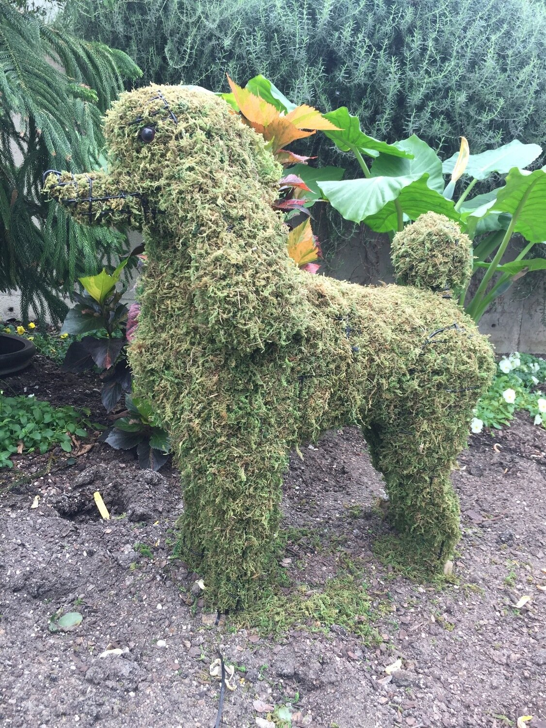 Poodle - Standard Topiary