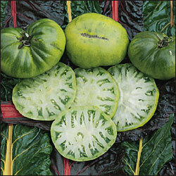 Tomato, Beefsteak, Aunt Ruby's German Green