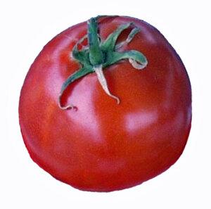 Tomato, Slicer, Burbank (Determinate)