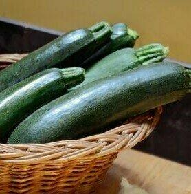 Easy Seeds: Squash, Zucchini (Astia)