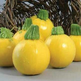 Squash, Zucchini, One Ball Yellow