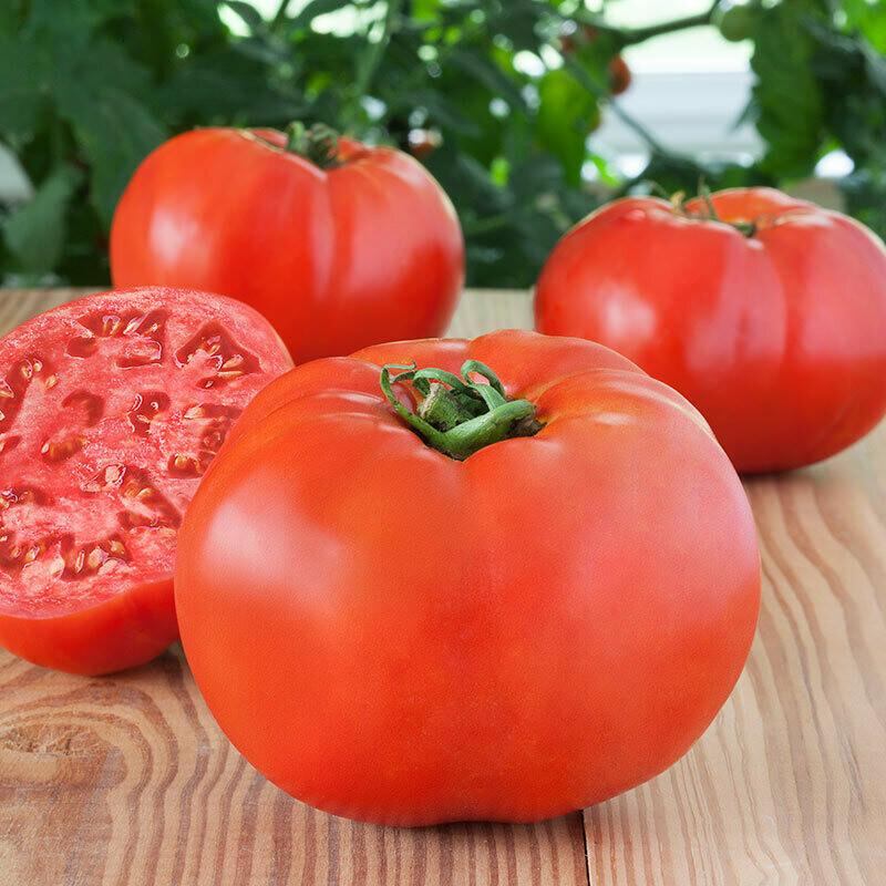 Tomato, Beefsteak, Debut (Determinate)