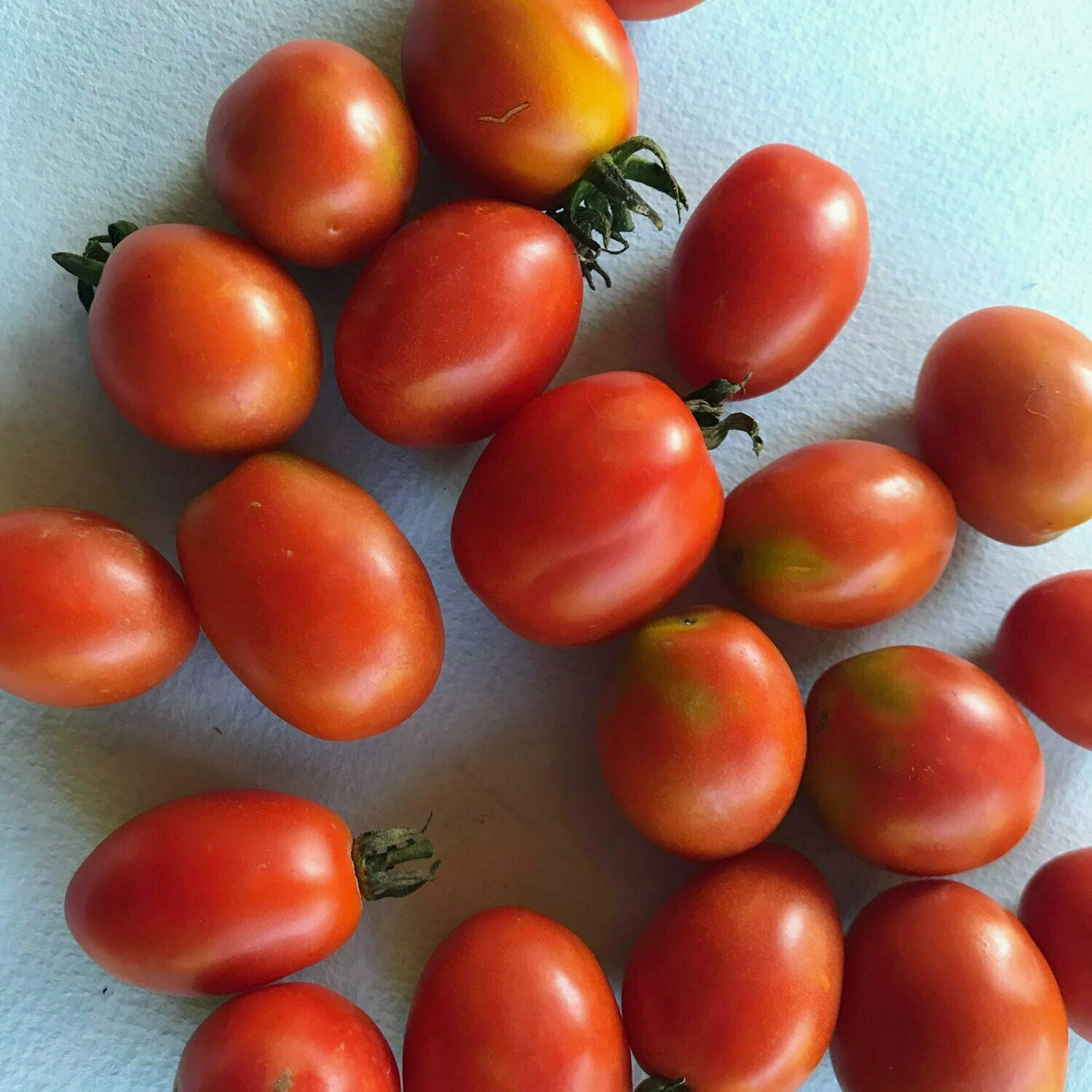 Tomato, Drying, Principe Borghese (Patio)