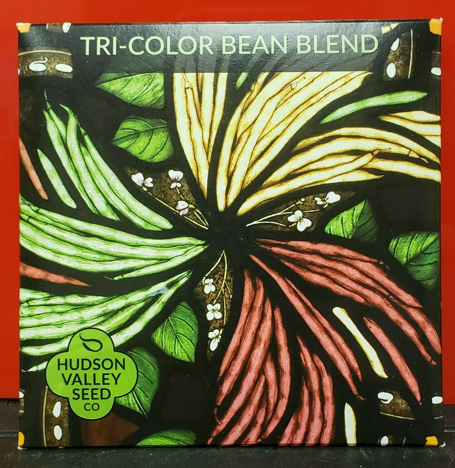 Art Pack Seeds: Bean, Bush (Tricolor Blend)