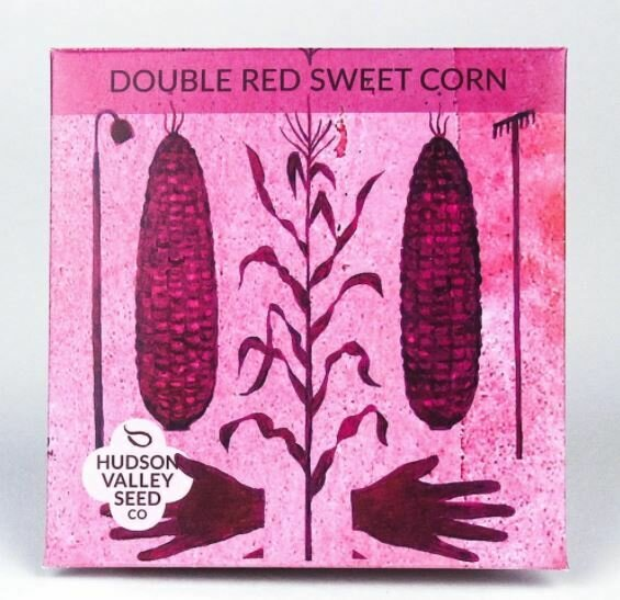 Art Pack Seeds: Corn, Sweet, 'Double Red'
