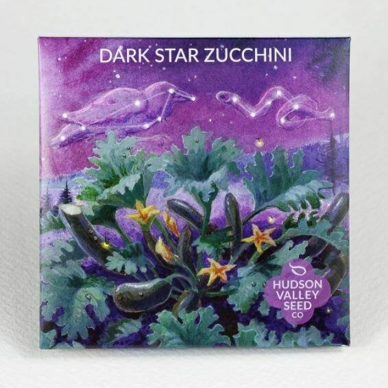 Art Pack Seeds: Zucchini 'Dark Star'