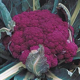 Cauliflower, Purple, 'Graffiti'