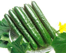 Cucumber, Slicing, 'Natsu Suzumi'