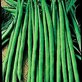Easy Seeds: Bean, Bush Filet  'Maxibel'