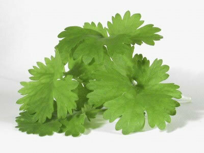 Easy Seeds: Cilantro 'Leaf'