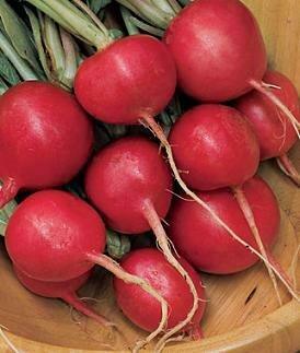 Easy Seeds: Radish 'Cherry Belle'