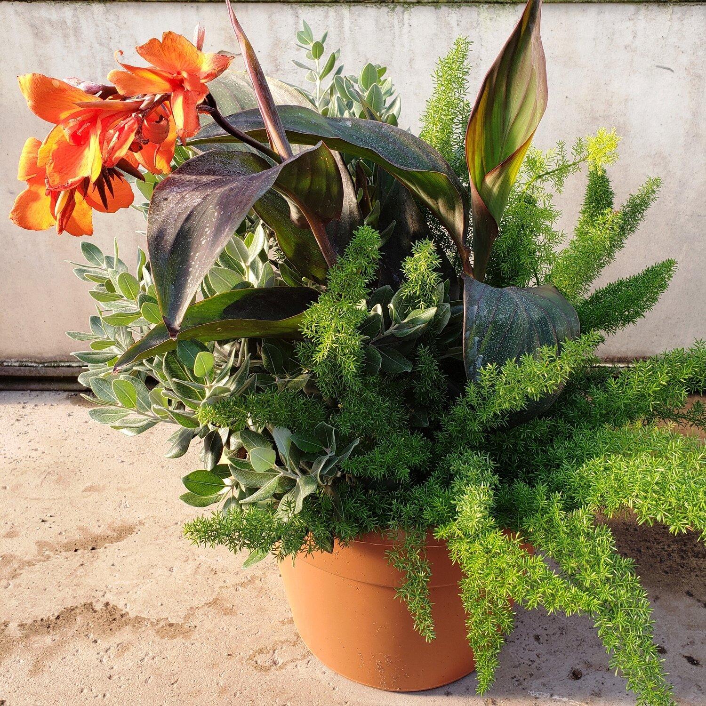 Patio Pot, Large, Sun: Pohutukawa, Foxtail Fern, Bronze Canna