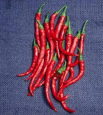 Pepper, Hot Cayenne, 'Long Red Thin'