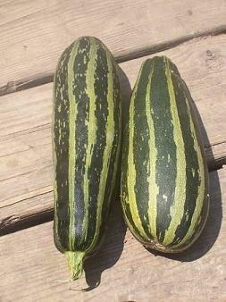 Squash, Zucchini, 'Cocozelle' (Bush)