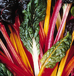Swiss Chard, 'Bright Lights'